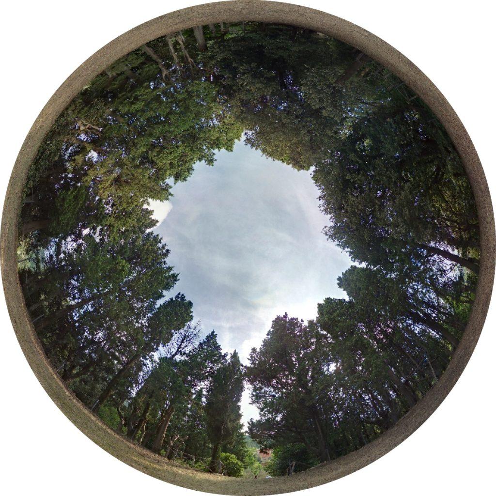 La corona di alberi che cinge la piazza circolare del parco Perticari